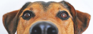 Close up of a dogs face